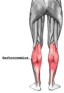 Gastrocnemius