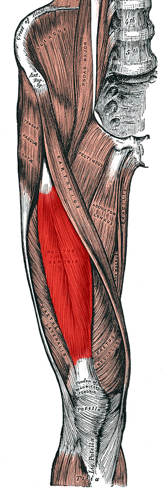 Anatomy Of The Knee Part 2 Muscles Around The Knee Joint