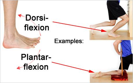 Ankle Dorsiflexion vs. Plantarflexion