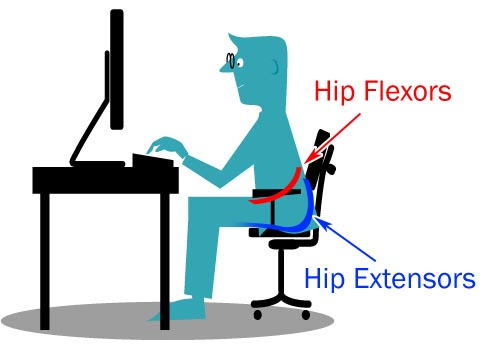 Hip Flexors and Hip Extensors